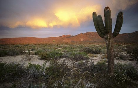 baja-desert-cactus-730433_14300_600x450